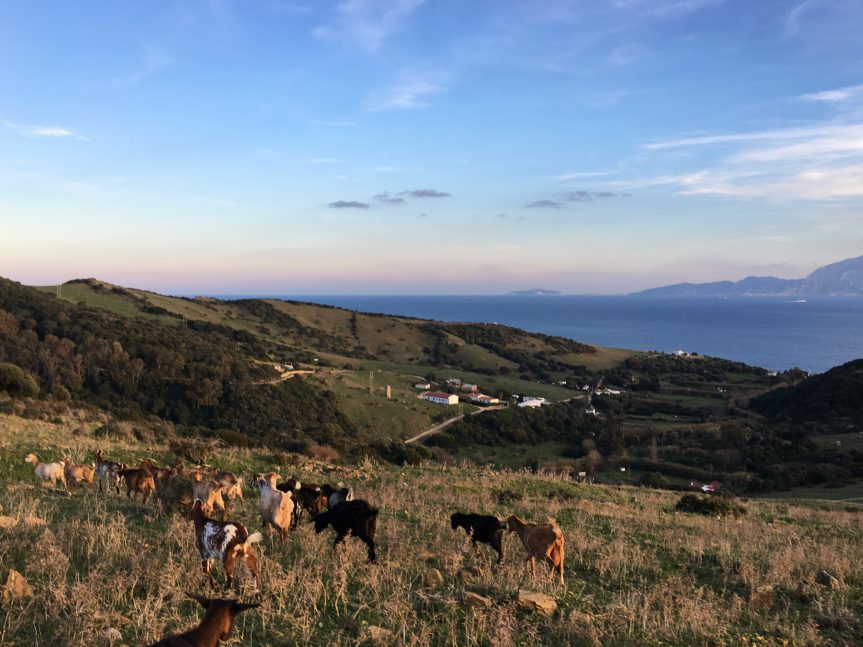 Eco Village Tour – Molino de Guadalmesí